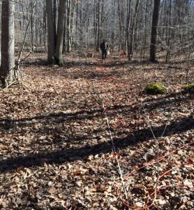 Geophysical Forensic Investigation at Crash Site