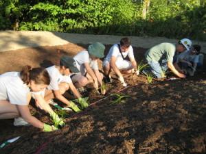 Working on Irvington Rain Garden